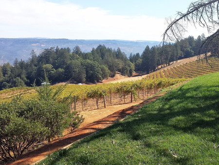 5 Tips to Do Napa on a Budget