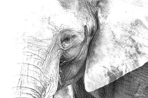 Elefant3.jpg