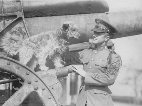 გმირი ძაღლი: რეგსი
