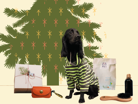 5 საუკეთესო საახალწლო საჩუქარი თქვენი ძაღლებისთვის 🎄🐶
