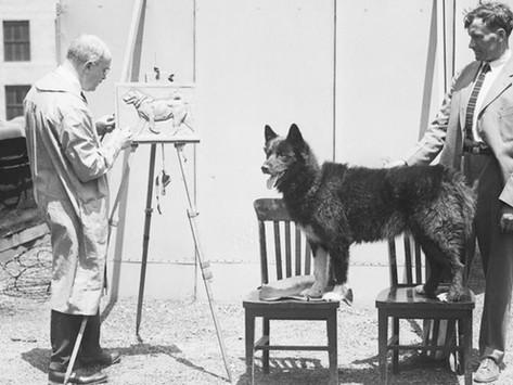 გმირი ძაღლი: ბალტო
