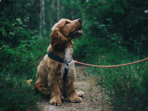 გარემო და ძაღლის ფეკალიები