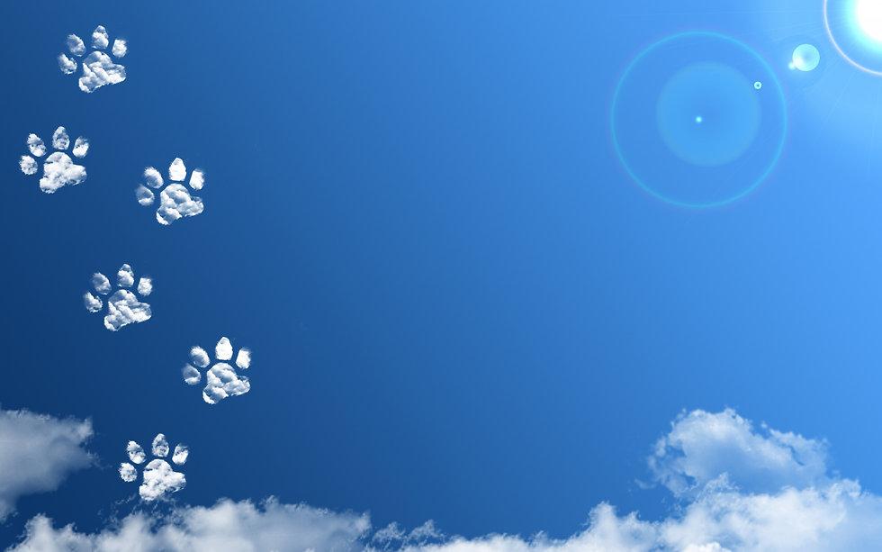 猫あしあと雲