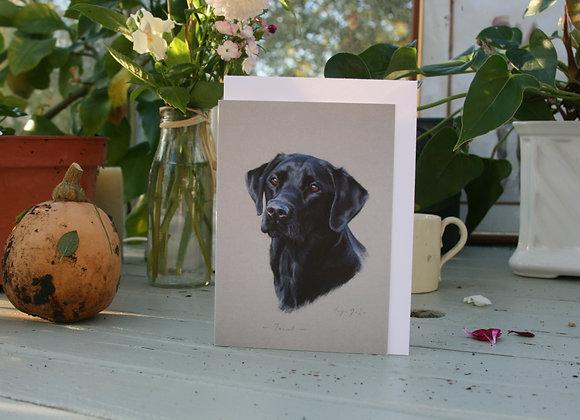 Teasel the Black Labrador