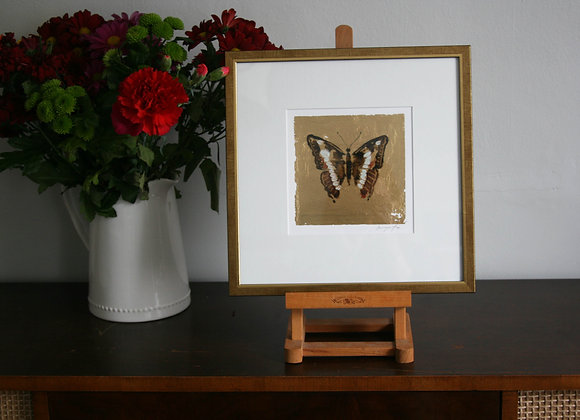 Framed Butterfly IV