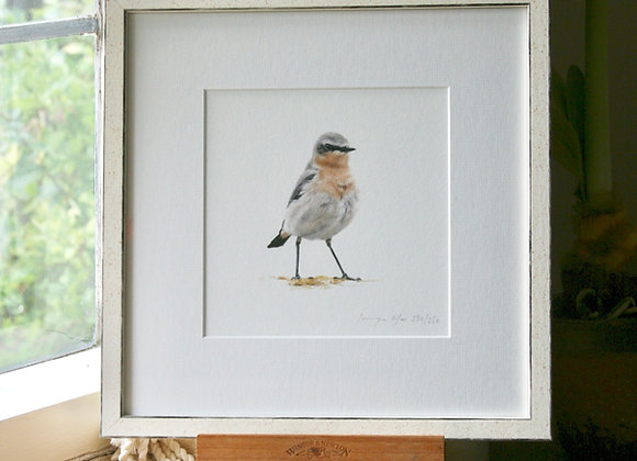 Framed Wheatear