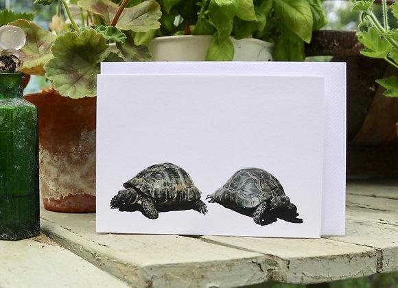 Jo & Lo the Tortoises