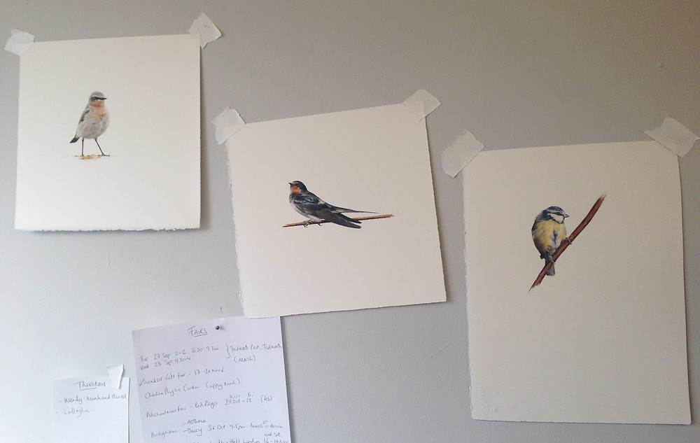 Pipit, Swallow and a Blue Tit in pastel on paper