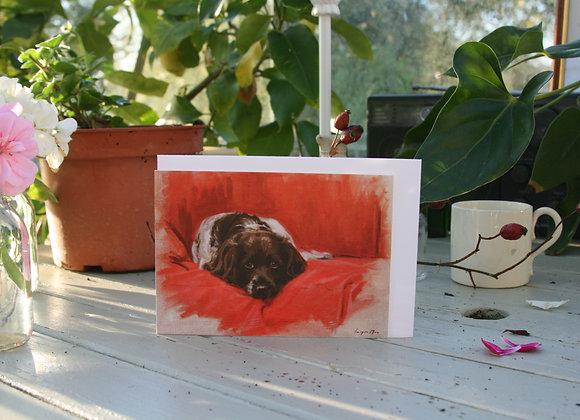 Blossom II the Springer Spaniel