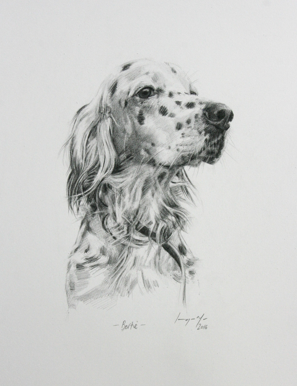 Bertie - pencil drawing on paper