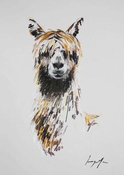 Alpaca I