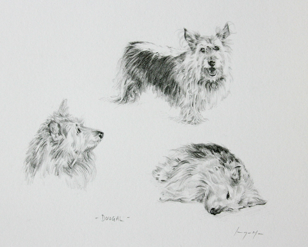 Dougal - pencil drawing on paper