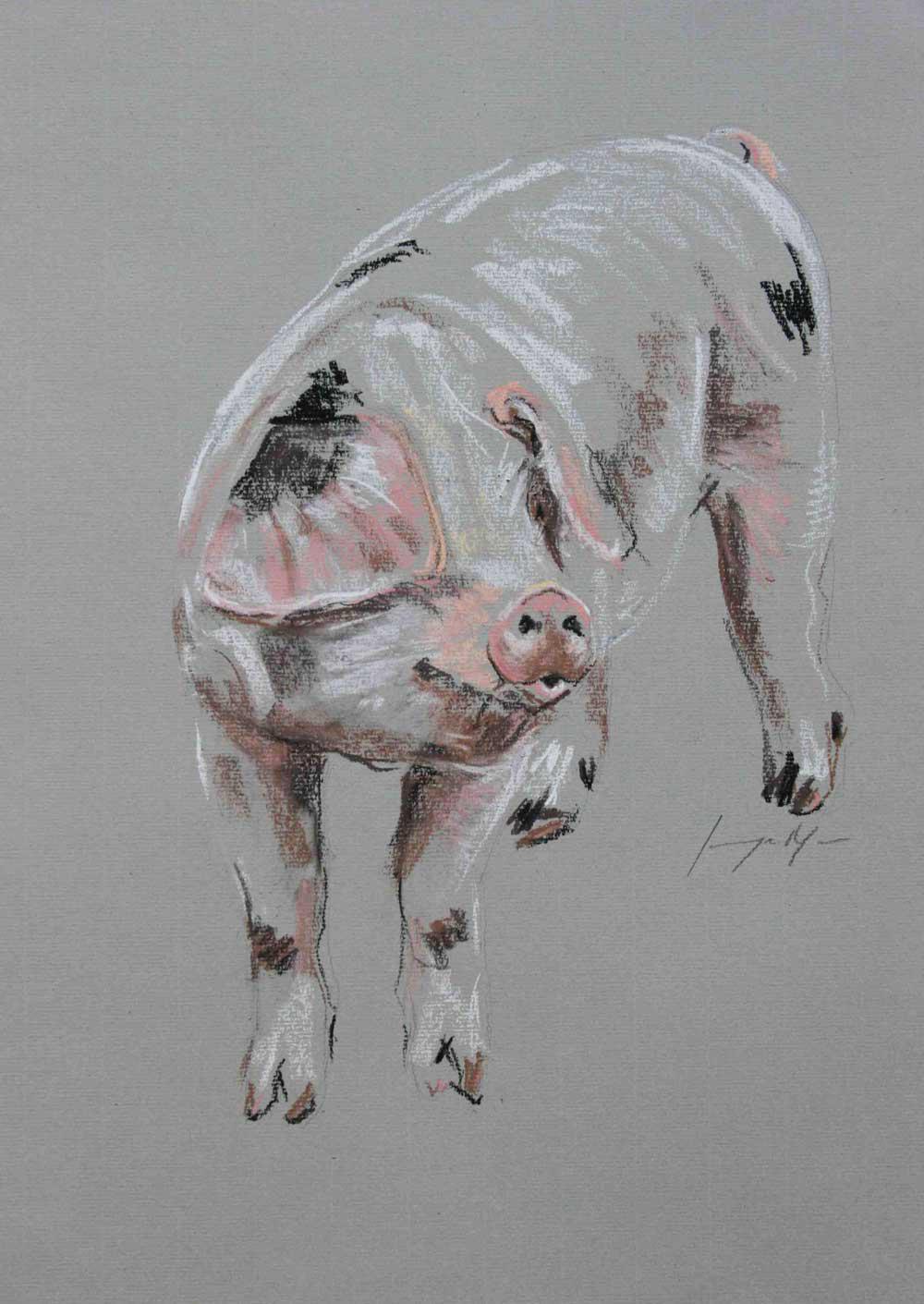 Pig IV