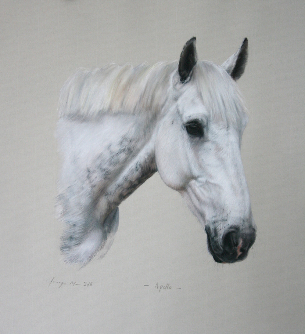 Apollo - pastel on paper