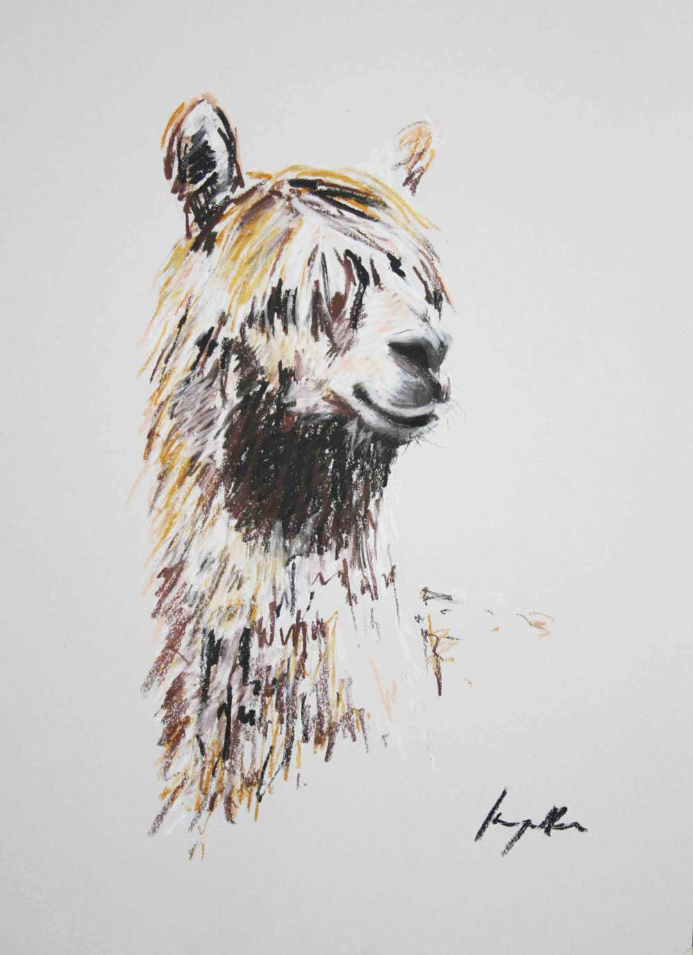 Alpaca II