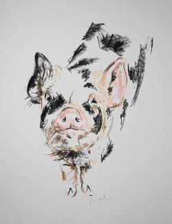 Kone Kone Pig II