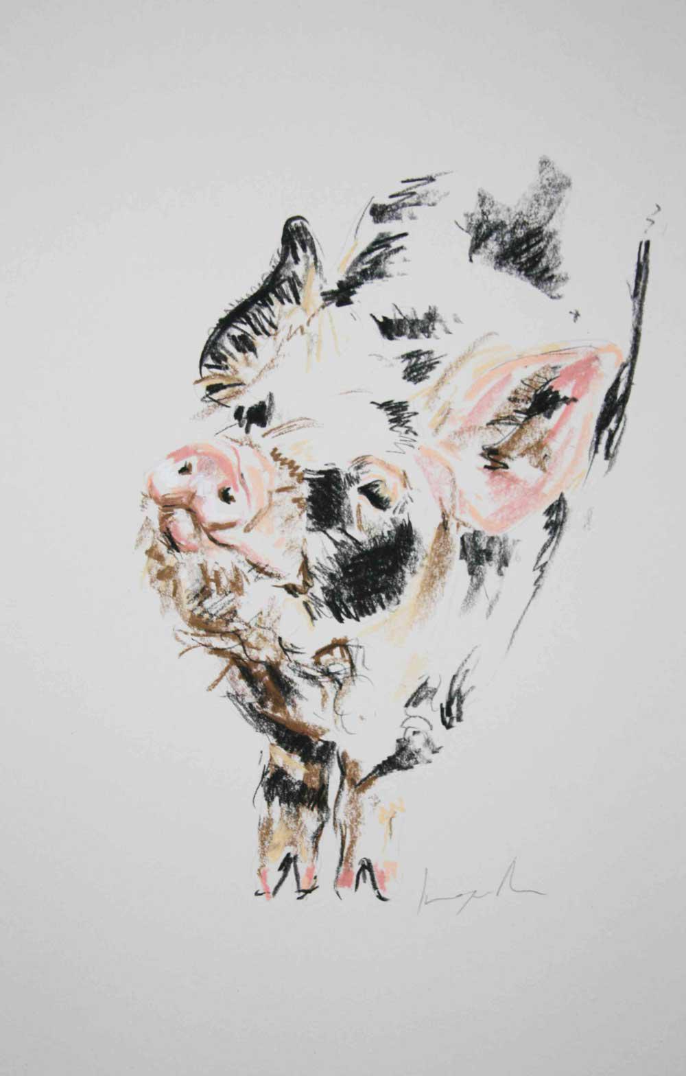 Kone Kone Pig I