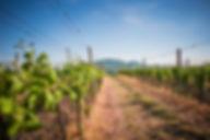Фото Сельское хозяйство.jpg