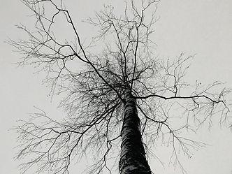 Tree with branches, spiderweb, veins/blo