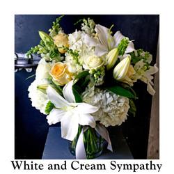 White and Cream Sympathy