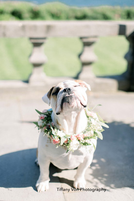 Bella the Bull Dog with Floral Collar