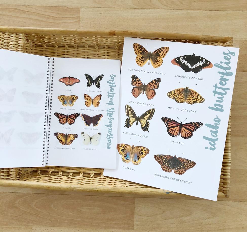 Jennifer O'Steen - 50statebutterflies2-m