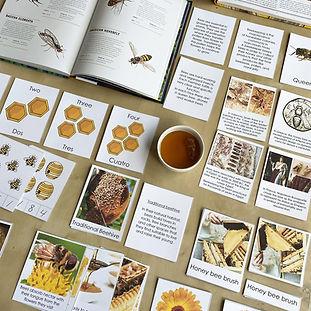 rebeca quintanilla - aprendiendode3 - honey and bees 1.jpg
