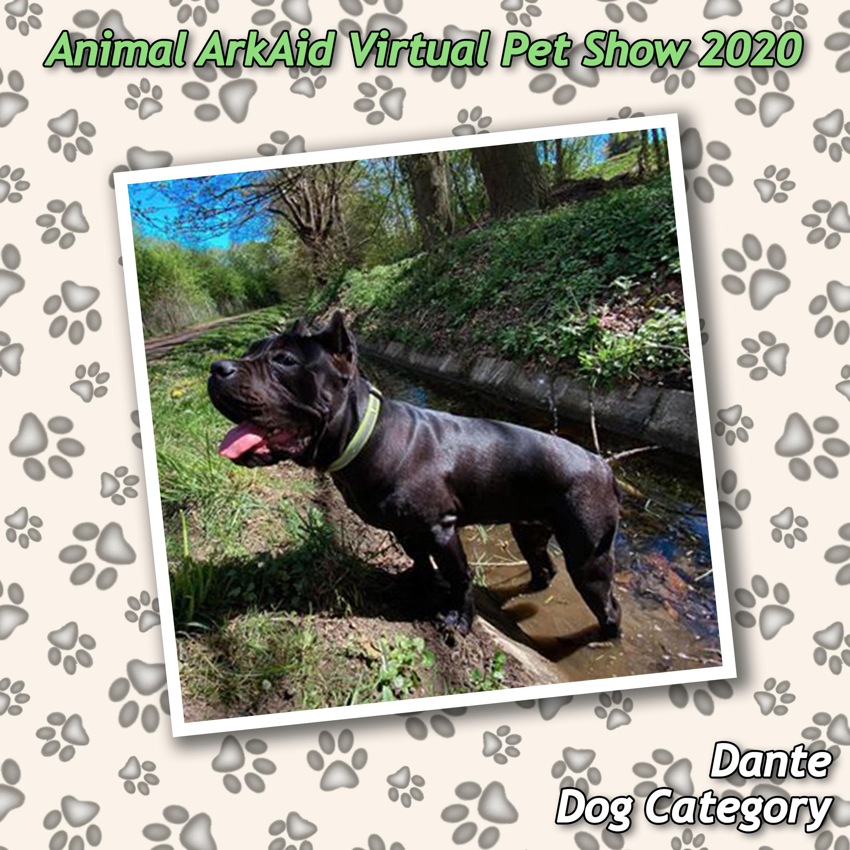 Dante the dog