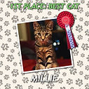 CAT1 MILLIE ROS.jpg