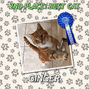 CAT2 GINGER ROS.jpg