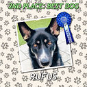 DOG2 RUFUS ROS.jpg