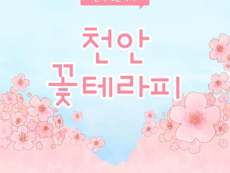 천안 성정동 꽃테라피 향긋함에 반했어요 !