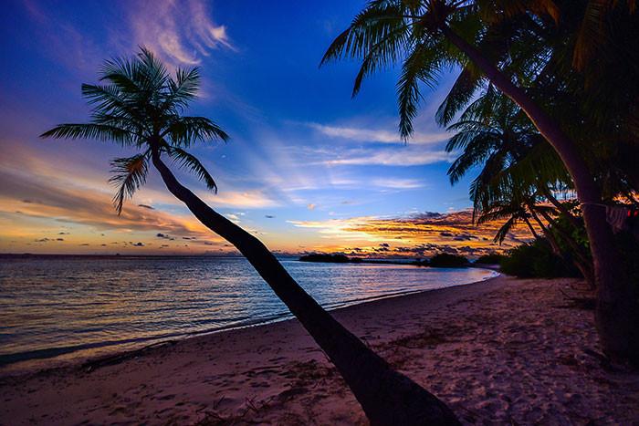 Cây dừa, bầu trời xanh