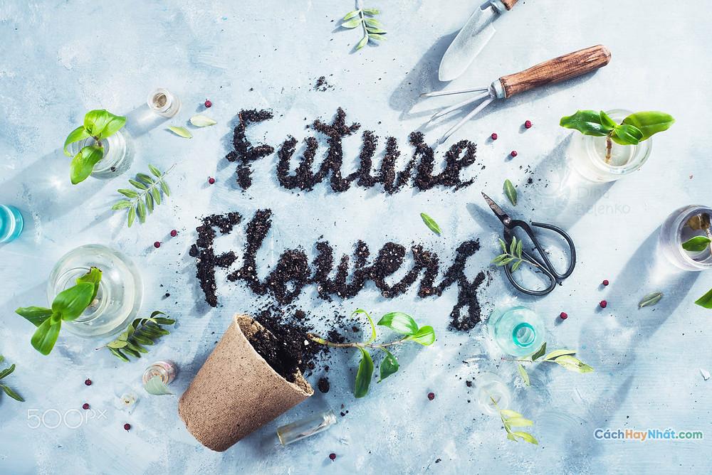 Ý tưởng quảng cáo nghệ thuật thực phẩm chế tác ảnh hoa tương lai bởi dina