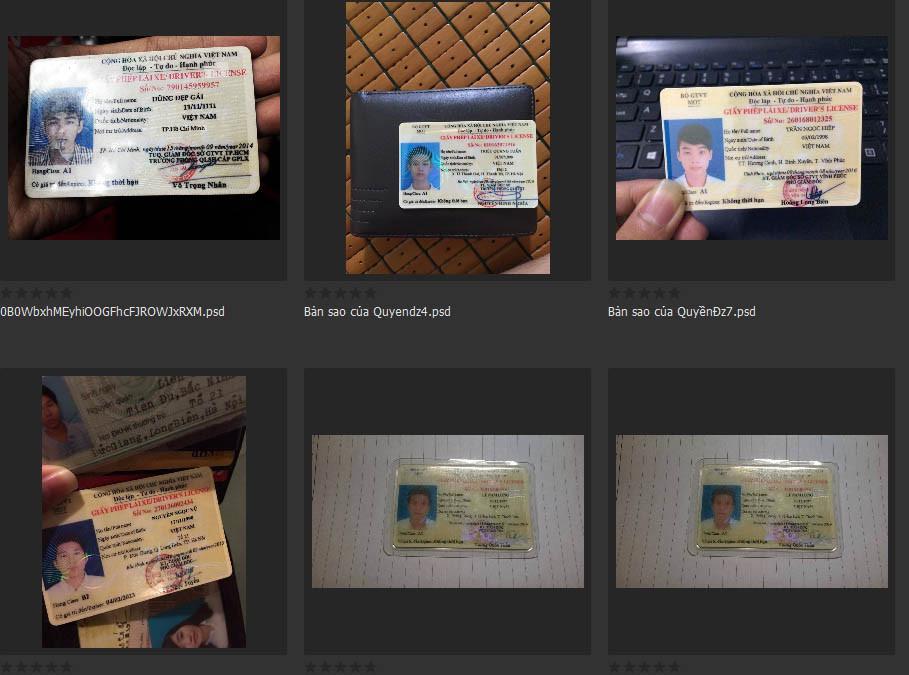 File PSD GPLX (Giấy Phép Lái Xe)