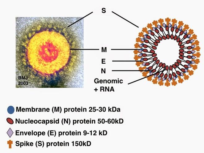 Chụp được ảnh virus Covid-19 ở độ phân giải nguyên tử.