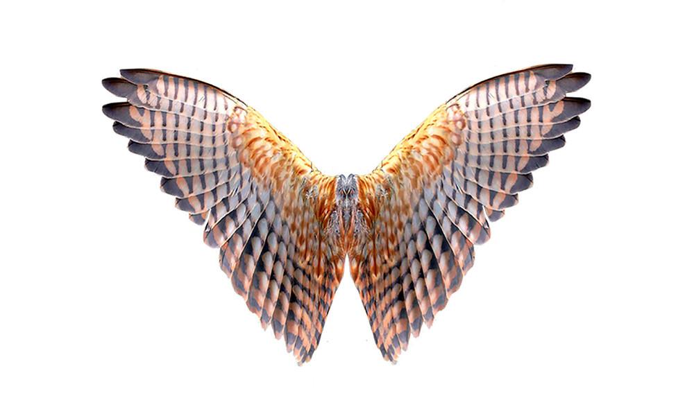 đôi cánh chim