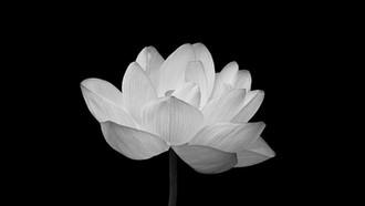38 ảnh buồn đám tang - Ảnh nến, ảnh hoa làm avatar cover