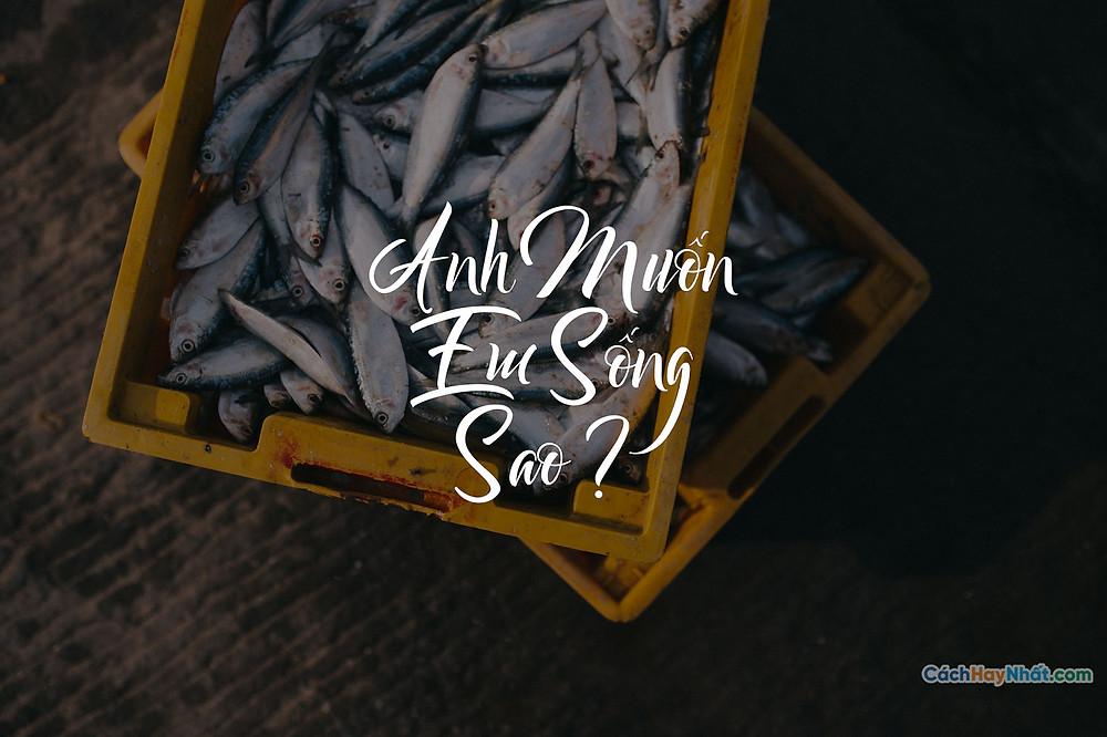 Font SVN-Bareken Việt Hóa Free
