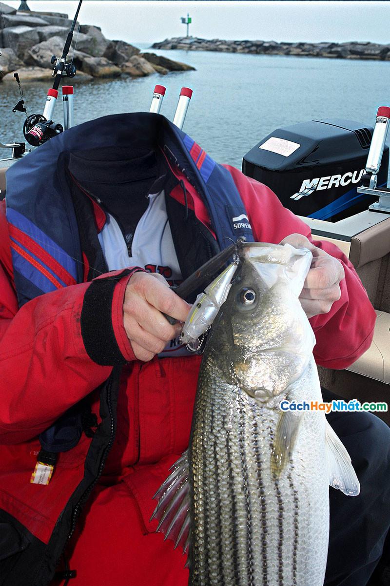 PSD ghép ảnh câu cá