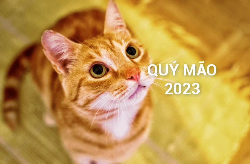 Quý Mão 2023