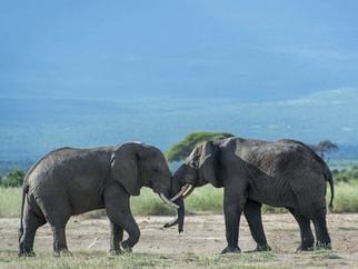 Top 10 Loài Động Vật Nặng Nhất Thế Giới