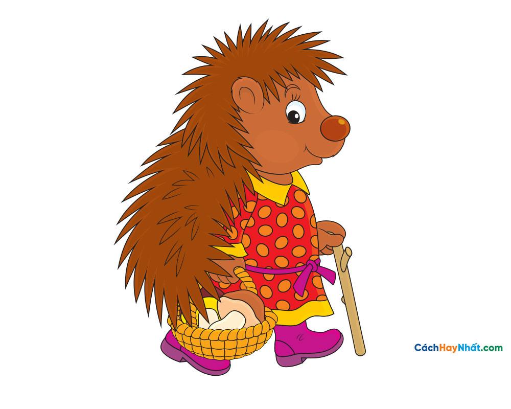con nhím - Hedgehog