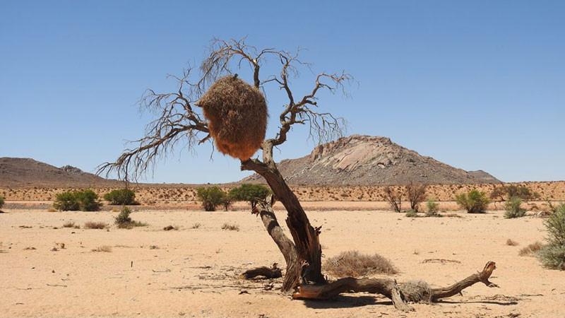 6. Sa mạc Kalahari