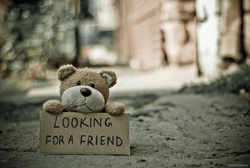 """gấu bông cầm tấm bảng bìa cát tông đề chữ """"looking for a friend"""""""
