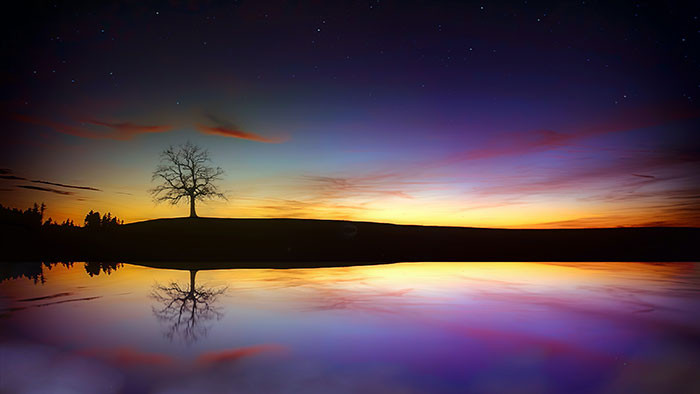 Bóng cây trên mặt nước