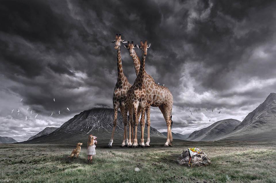 Top 10 Loài Động Vật Cao Nhất Thế Giới