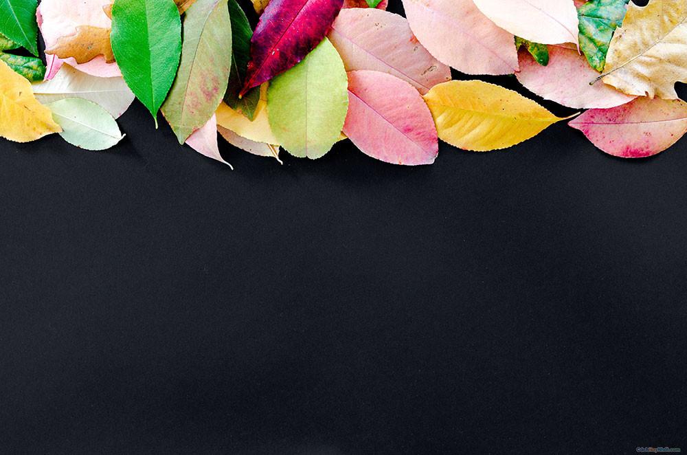 La mùa thu nhiều màu trên nền đen
