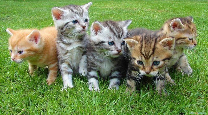 Đàn mèo con nhiều màu sắc
