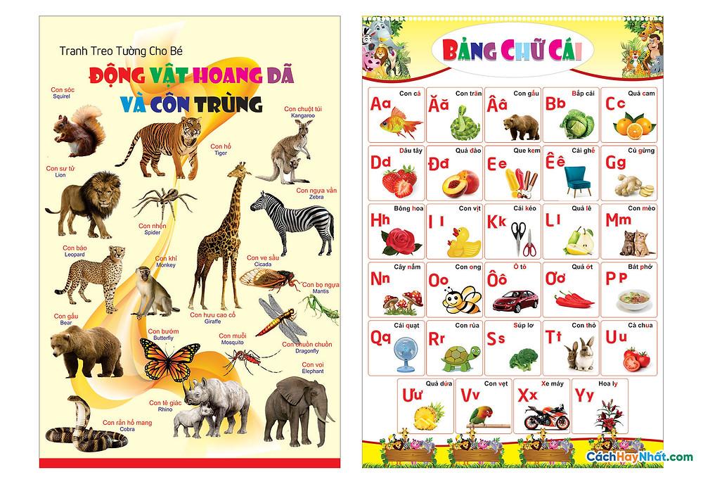 Bảng Chữ Cái Tiếng Việt Vector Corel